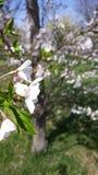 Blommablomma Arkivbild