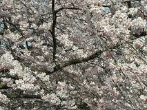 Blommablomning Arkivbild
