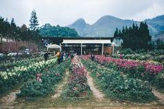 Blommablomning i vinter Arkivbild