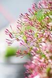 Blommablomningar Arkivfoto