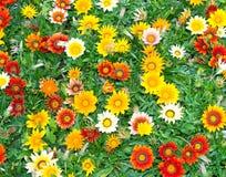 Blommablomningbakgrund Royaltyfria Bilder