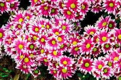 Blommablomningen Royaltyfri Bild