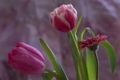 Blommaboquet Fotografering för Bildbyråer