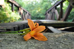 Blommabro Arkivfoton