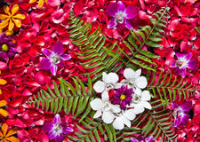 blommabrunnsort Arkivfoto