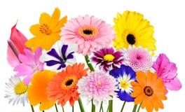 Blommabukettsamling av isolerade olika färgrika blommor Arkivfoton
