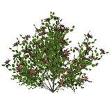 Blommabuske - 3D framför vektor illustrationer