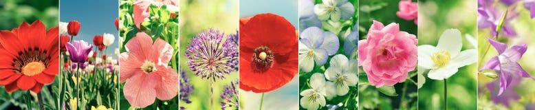 Blommacollage av olika typsommarblommor arkivfoton
