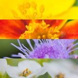 Blommacollage av sommarblommor Royaltyfri Fotografi