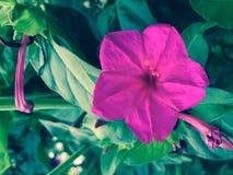 blommaColorfy färg royaltyfri fotografi