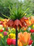 Blommade växter i trädgård Royaltyfri Foto