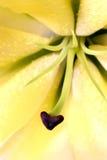 Blommadetalj Royaltyfri Bild