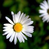 Blommadetalj Arkivbilder