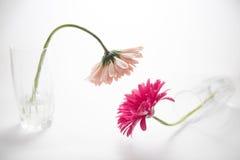Blommadragning Royaltyfri Fotografi