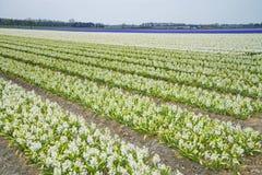 Blommafält Royaltyfri Fotografi