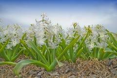 Blommafält Arkivfoton