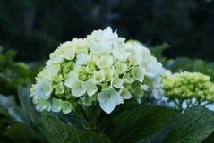 Blommafält Royaltyfria Bilder