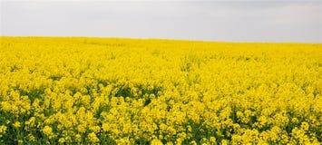 Blommafält av guling Arkivbild