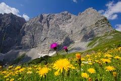 Blommafält framme av massiva karwendelbergbildande Arkivbilder