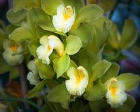 Blommafält i Carlsbad Arkivfoto