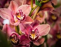 Blommafält i Carlsbad Arkivbild