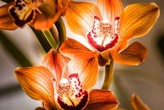 Blommafält i Carlsbad Arkivbilder