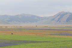 Blommafält i Castelluccio di Norcia Arkivfoto