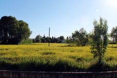 Blommafält i Granada arkivfoto