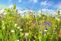Blommafält i sommar royaltyfri fotografi