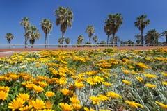 Blommafält och palmträd Royaltyfria Bilder