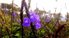 Blommafält på berget royaltyfria bilder