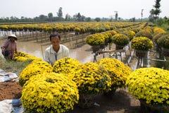 Blommafält på Sadec, Vietnam royaltyfria foton