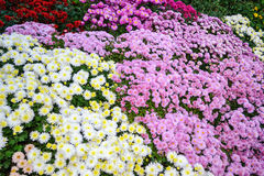 Blommafältbakgrund Arkivbild