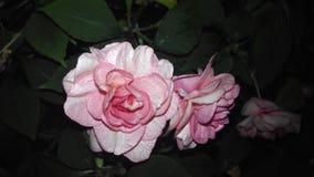 Blommafärg Royaltyfri Fotografi