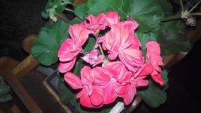 Blommafärg Arkivbild