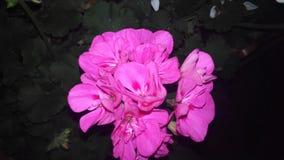 Blommafärg Arkivfoton