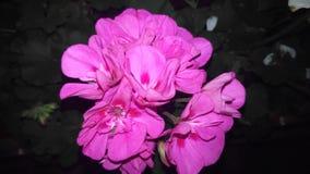 Blommafärg Arkivbilder