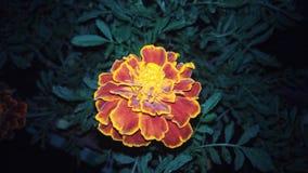 Blommafärg Royaltyfria Foton