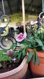 Blommafärger Royaltyfri Bild