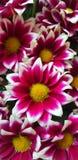 Blommafärgtapet arkivbild