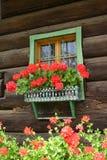 blommafönster Fotografering för Bildbyråer