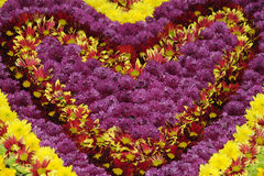 blommaförälskelse Arkivbild