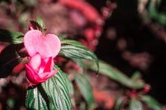 Blommaförälskelse Fotografering för Bildbyråer