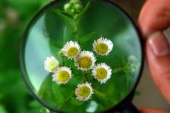 blommaförstoringsapparat Royaltyfri Fotografi