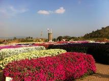 Blommafest Arkivbilder