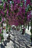 Blommafestival (festas gör povoen, Campo Maior 2015, Portugal), Arkivbilder