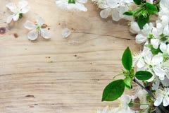 Blommafilial för körsbärsröd blomning på träbakgrund med utrymme för Royaltyfri Fotografi
