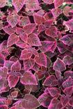 blommafilt Royaltyfri Bild
