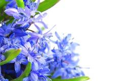 blommafjäder Royaltyfria Foton