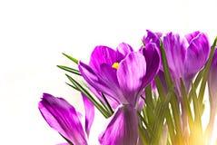 blommafjäder Royaltyfri Bild